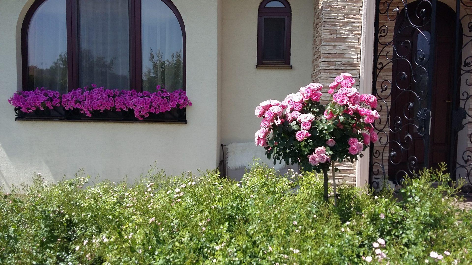 Ruže na kmienku