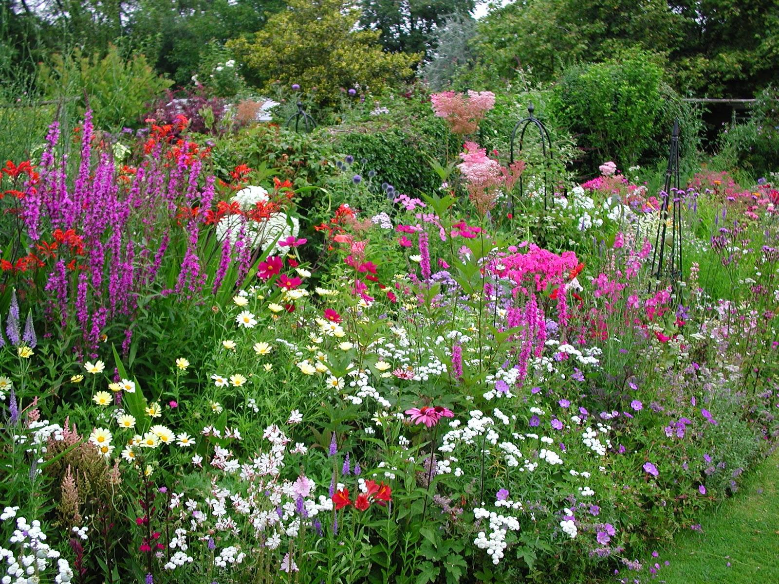 Záhony s domácimi rastlinami