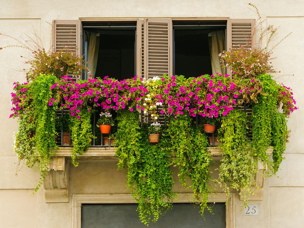 Najkrajšie balkónové kvety